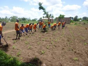Die Schüler beim Jäten. Den Mais haben sie selber gepflanzt, damit sie in den Pausen eine Mahlzeit erhalten können.